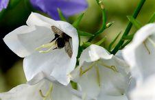 Free Flower, White, Flora, Bee Royalty Free Stock Image - 121057856