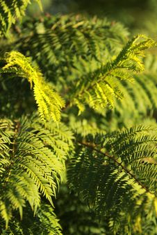 Free Vegetation, Plant, Ferns And Horsetails, Fern Royalty Free Stock Photo - 121057995