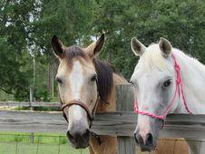 Free Horse, Bridle, Horse Like Mammal, Horse Tack Royalty Free Stock Image - 121058006