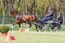 Free Horse Harness, Horse, Carriage, Horse And Buggy Stock Photos - 121058403
