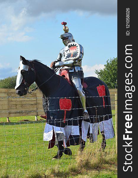 Horse, Horse Harness, Horse Like Mammal, Stallion