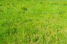 Free Green Grass In The Park Royalty Free Stock Photography - 121313947