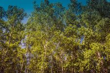 Free Green Trees In Summer Park Retro Stock Images - 121314004