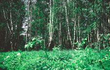 Free Green Trees In Summer Park Retro Royalty Free Stock Photography - 121314447
