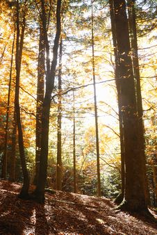 Free Sunbeam Stock Photos - 12158693