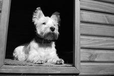 Free Dog, Dog Like Mammal, White, Black And White Royalty Free Stock Photography - 121556317