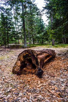 Free Tree, Woodland, Forest, Plant Stock Photos - 121556413