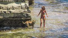 Free Dog, Fun, Dog Like Mammal, Vacation Stock Images - 121557034