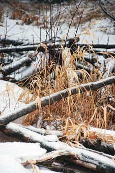 Free Winter Meadow Royalty Free Stock Photos - 12167528