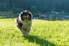 Free Dog Breed, Grass, Dog, Dog Breed Group Stock Images - 121662964