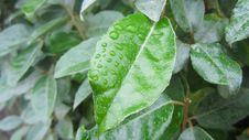 Free Leaf, Plant, Plant Pathology, Plant Stem Royalty Free Stock Photos - 121663068