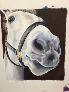 Free Bridle, Horse, Horse Like Mammal, Horse Tack Stock Images - 121663074