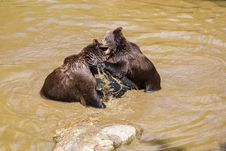 Free Brown Bear, Grizzly Bear, Fauna, Bear Stock Photos - 121707423