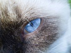 Free Whiskers, Cat, Eye, Nose Stock Image - 121707521