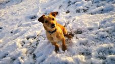 Free Snow, Dog, Dog Breed, Winter Stock Images - 121707554
