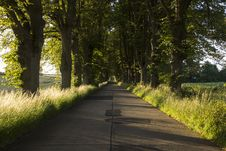 Free Path, Nature, Tree, Road Royalty Free Stock Image - 121708156