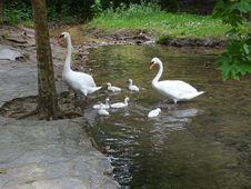 Free Waterway, Bird, Swan, Water Bird Stock Images - 121708214