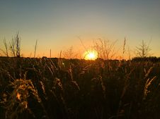 Free Sky, Sun, Field, Evening Royalty Free Stock Photography - 121708267