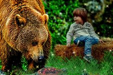 Free Mammal, Brown Bear, Grizzly Bear, Wildlife Royalty Free Stock Image - 121933856