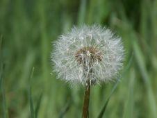 Free Dandelion, Flower, Flora, Close Up Stock Image - 121933921