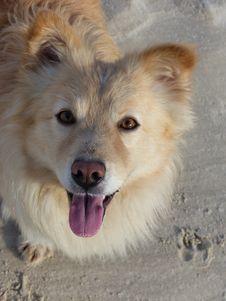 Free Dog, Dog Breed, Dog Breed Group, Dog Like Mammal Royalty Free Stock Photography - 121933947