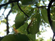 Free Leaf, Branch, Tree, Plant Pathology Royalty Free Stock Photography - 121934267