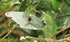 Free Leaf, Insect, Invertebrate, Plant Pathology Stock Photo - 121934370