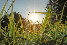 Free Grass, Plant, Grass Family, Field Stock Photos - 121934403