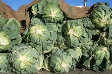 Free Plant, Vegetable, Leaf Vegetable, Produce Stock Photos - 121934663