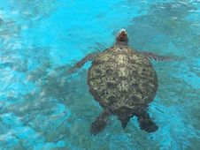 Free Sea Turtle, Turtle, Loggerhead, Water Stock Photos - 121934783