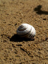 Free Sea Snail Shell Royalty Free Stock Image - 1221316