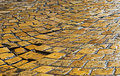 Free Rainy Pavement Stock Photography - 1226352