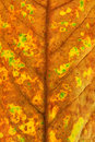Free Autumn Leaf 02 Royalty Free Stock Photos - 1226868