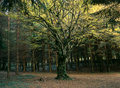 Free Magic Tree Royalty Free Stock Image - 1229336