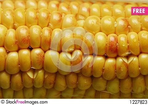 Wet corn Stock Photo