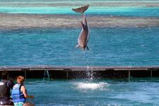 Free Dolphin In The Air Stock Images - 1220014