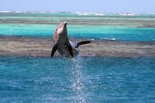 Free Dolphin Jump Royalty Free Stock Photo - 1220065