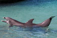 Dolphin Show Off Royalty Free Stock Images