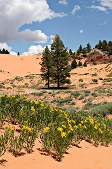 Summer Flowers On Pink Sand Dunes Stock Photography