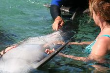 Dolphin Care Royalty Free Stock Images