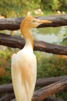 Free Heron Stock Photo - 1220420