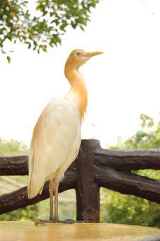 Free Heron Stock Images - 1220424
