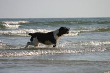 Beach Dog Stock Image