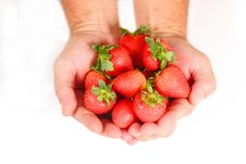 Free Handful Of Strawberries Royalty Free Stock Image - 1221966