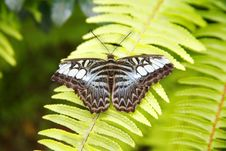Free Butterfly Stock Photos - 1222183