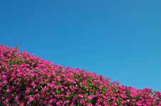 Free Flowers And Sky Royalty Free Stock Photography - 1222347