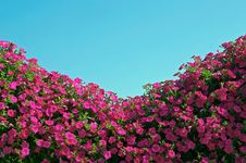 Free Flowers And Sky Royalty Free Stock Images - 1222359