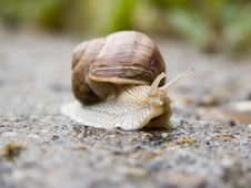 Free Snail Royalty Free Stock Image - 1222506