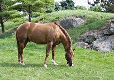Free Horse Grazing Stock Photos - 1223483