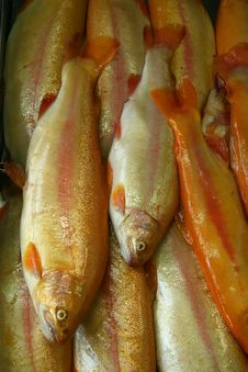 Free Fish Stock Images - 1223714